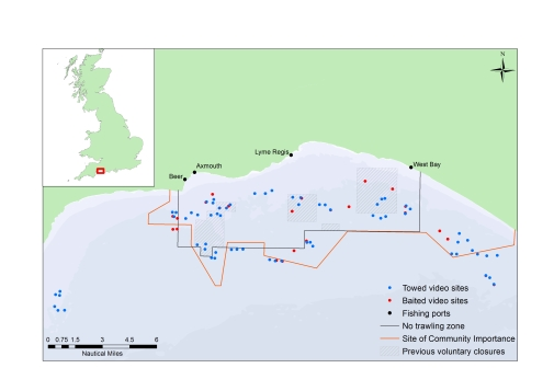 Lyme Bay towed & baited survey sites