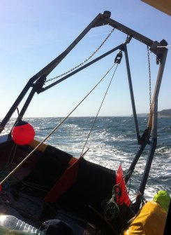 Lyme Bay fieldwork